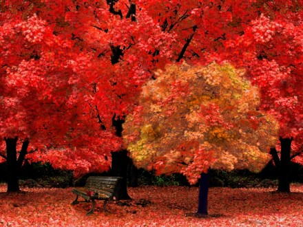 red-autumn-art-autumn-autumnscene-beautiful-leaves-nature-park-park-bench-red-seasons-trees-yellow-1920x2560
